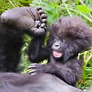 Young Mountain Gorilla, Volcanoes National Park by Sue Earnshaw