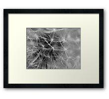 Delicate Dandy Framed Print