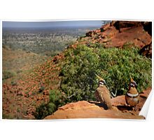 Kings Canyon - Spinifex Pigeons Poster