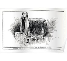 All about dogs a book for doggy people Charles Henry Lane 1900 0295 Yorkshire Terrier Yorkie_jpg Poster