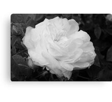 Rose in Black and White Canvas Print