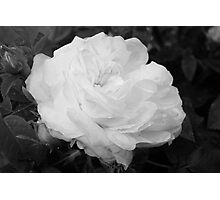 Rose in Black and White Photographic Print