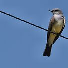 High On a Wire by Barb Miller