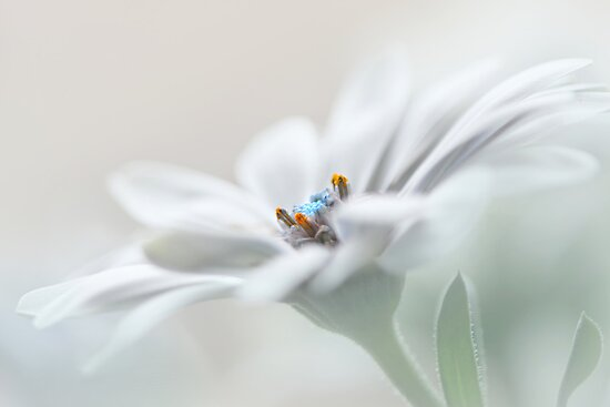 Daisy dream by Lyn Evans