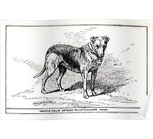 All about dogs a book for doggy people Charles Henry Lane 1900 0201 Smooth Collie_jpg Poster