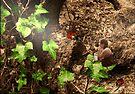 'Ladybird ladybird' by Susie Hawkins