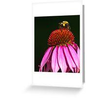 BUMBLEBEE ON PURPLE CONE FLOWER Greeting Card