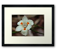White Flower Close-up Framed Print
