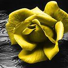 yellow flower by Lildudette016