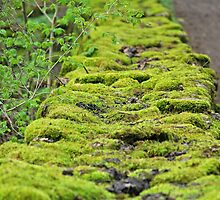 moss-covered stonewall by Paola Svensson