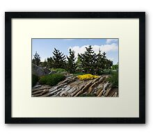 Rock Garden With Pines Framed Print