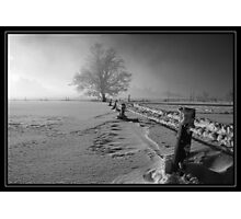 Tough winter Photographic Print