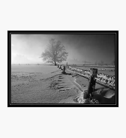 Tough winter Photographic Print