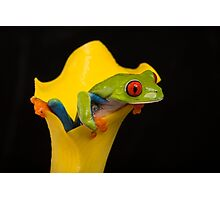 Red Eyed Tree Frog Photographic Print