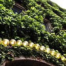 Ivy Lights! by tmtphotography