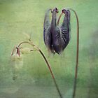 Budding Columbine by AnnieSnel