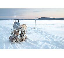 The dailyanimals dog-sled team Photographic Print