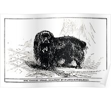 All about dogs a book for doggy people Charles Henry Lane 1900 0277 King Charles Spaniel_jpg Poster