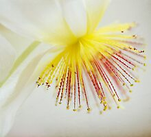 Bright and Delicate - A magical flower macro by Demoiselle