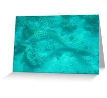 Eel Greeting Card