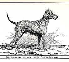 All about dogs a book for doggy people Charles Henry Lane 1900 0233 Bedlington Terrier_jpg by wetdryvac
