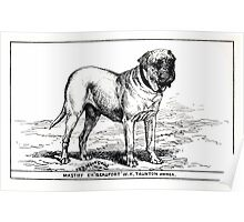 All about dogs a book for doggy people Charles Henry Lane 1900 0187 Mastiff_jpg Poster