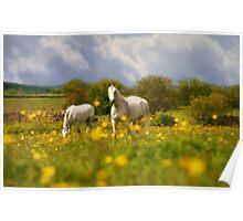 Golden Buttercups Of Springtime Poster
