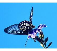 Butterfly Dance Photographic Print