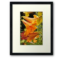 "Trumpet Lily ""African Queen"" Framed Print"