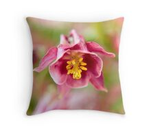 blossom of a aquilegia in purple auf Redbubble von pASob-dESIGN