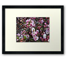 Bees & Blossoms Framed Print