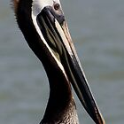 A Pelican Pose by Regenia Brabham