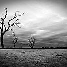 Tenindewa Rd ~ Mullewa WA by Pene Stevens
