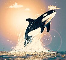 sunset orca by MKIV
