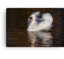 Swan 'Under full Sail' Canvas Print