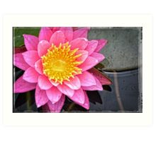 Pink Lotus Flower - Zen Art By Sharon Cummings Art Print