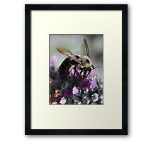 Purple Buffet Framed Print