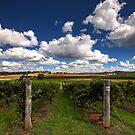 Mudgee Vineyards by David Haworth