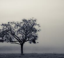 Foggy Morning: treescape by therkd