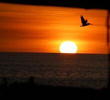 sunsetting pelicans. by RunningBackward