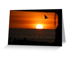 sunsetting pelicans. Greeting Card