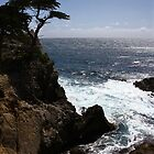 Monterey's Lone Cypress Tree by fototaker