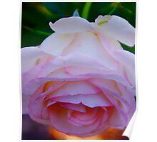 Carnation Pink Poster