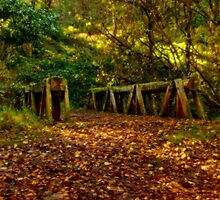 """""""Autumn Crossing"""" by Phil Thomson IPA"""