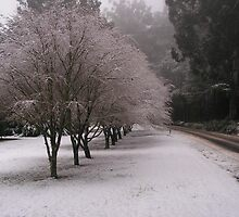 Toolangi snow by minarri