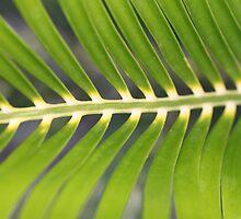 Green Palm by AlexKokas