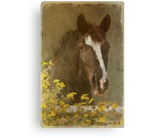 Vintage Bella Canvas Print