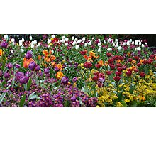 Tulips in Hyde Park Photographic Print