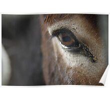 A Donkey's Eye Poster