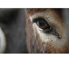 A Donkey's Eye Photographic Print